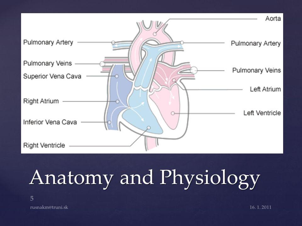 Anatomy and Physiology 16. 1. 2011 5 rusnakm@truni.sk