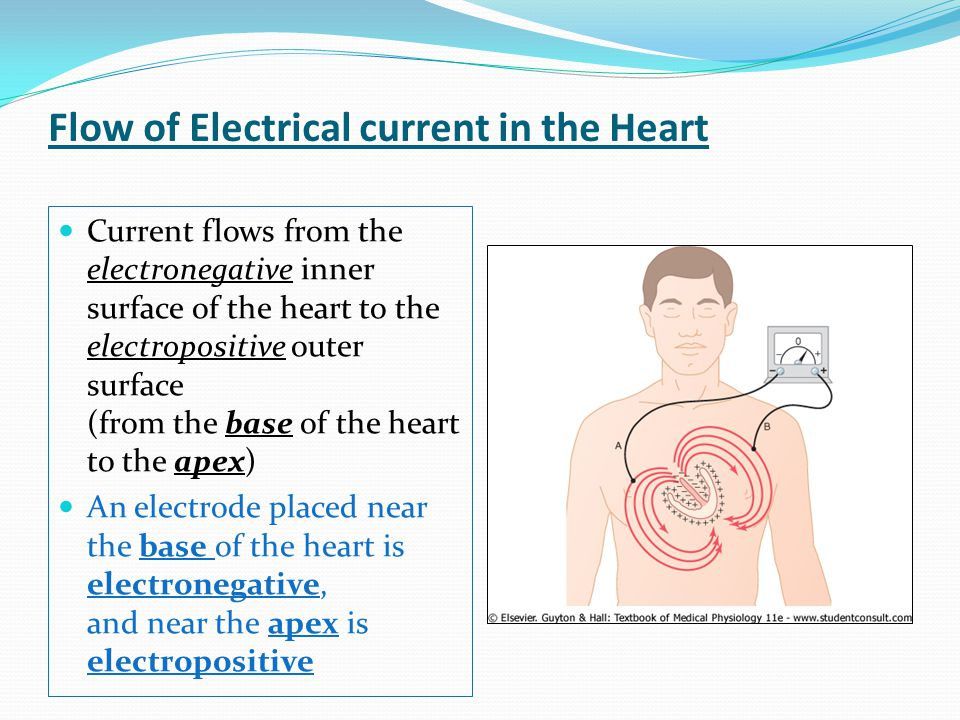 Current flows from the electronegative inner surface of the heart to the electropositive outer surface (from the base of the heart to the apex) An ele