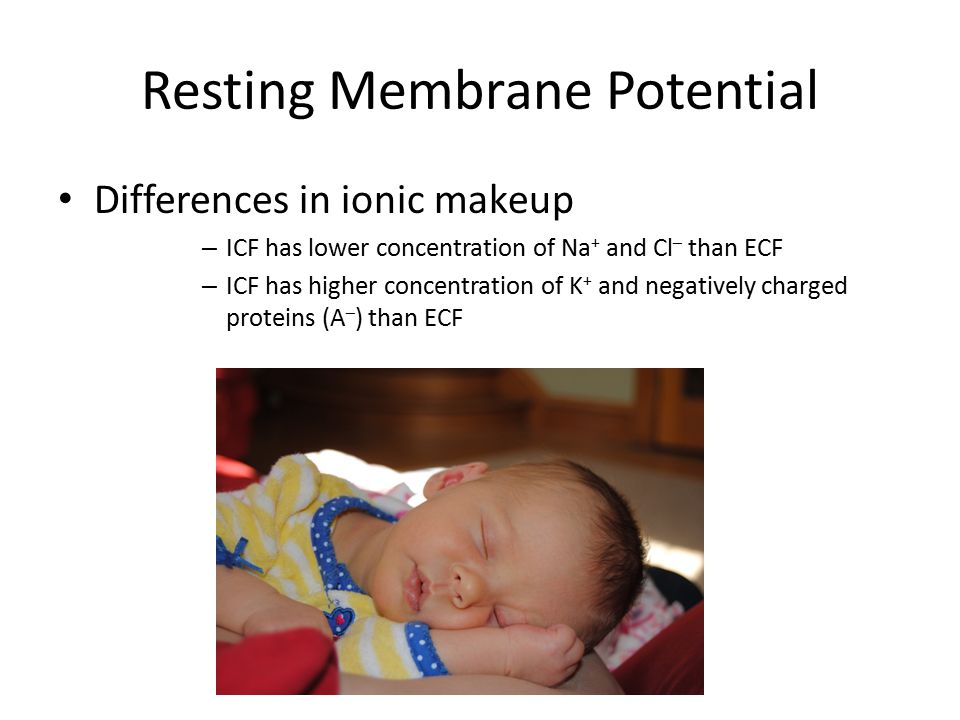 Resting Membrane Potential Differences in ionic makeup – ICF has lower concentration of Na + and Cl – than ECF – ICF has higher concentration of K + a