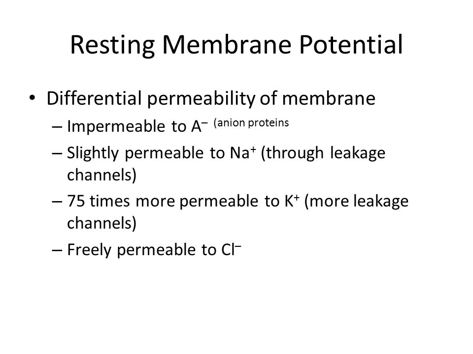 Resting Membrane Potential Differential permeability of membrane – Impermeable to A – (anion proteins – Slightly permeable to Na + (through leakage ch