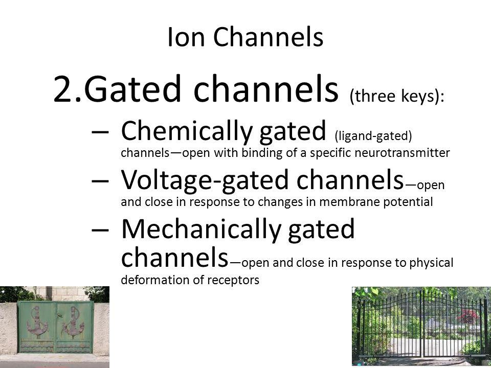 Figure 11.6 (Volt) Na + ClosedOpen Receptor (Chemical) Na + K+K+ K+K+ Neurotransmitter chemical attached to receptor Chemical binds ClosedOpen Membrane voltage changes