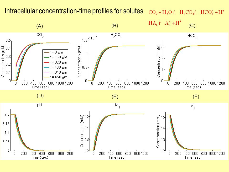 (F) (D) (E) (A) (B)(C) Intracellular concentration-time profiles for solutes