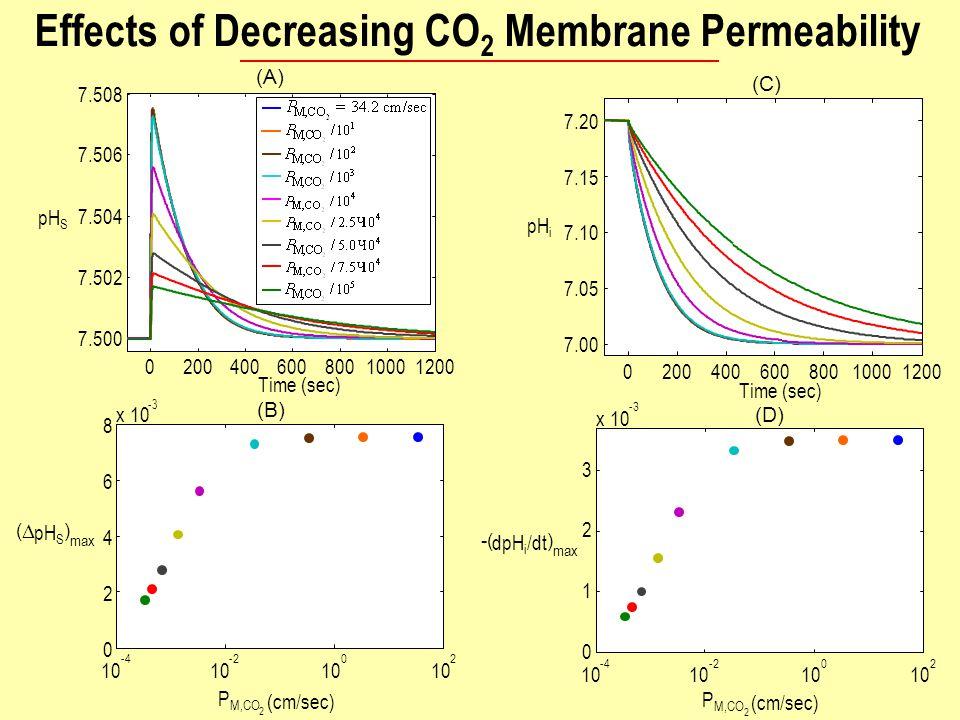 020040060080010001200 7.500 7.502 7.504 7.506 7.508 Time (sec) pH S (A) 020040060080010001200 7.00 7.05 7.10 7.15 7.20 Time (sec) pH i (C) 10 -4 10 -2 10 0 2 (  pH S ) max P M,CO 2 (cm/sec) x 10 -3-3 (B) (D) 0 x 10 -3 10 -4 10 -2 10 0 2 1 2 3 -( dpH i /dt ) max P M,CO 2 (cm/sec) Effects of Decreasing CO 2 Membrane Permeability