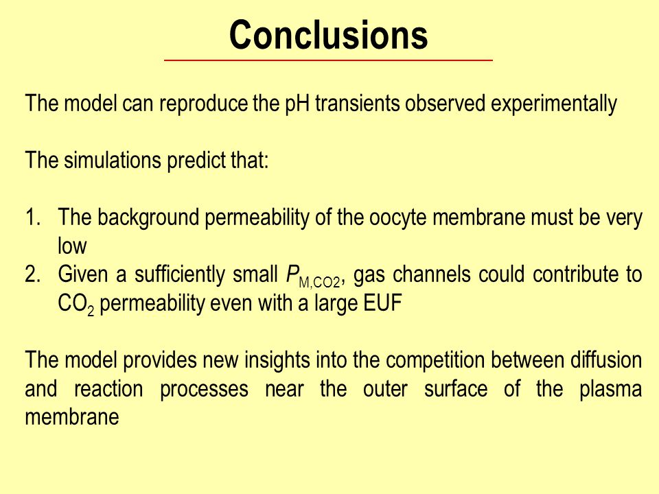 Conclusions The model can reproduce the pH transients observed experimentally The simulations predict that: 1.The background permeability of the oocyte membrane must be very low 2.Given a sufficiently small P M,CO2, gas channels could contribute to CO 2 permeability even with a large EUF The model provides new insights into the competition between diffusion and reaction processes near the outer surface of the plasma membrane