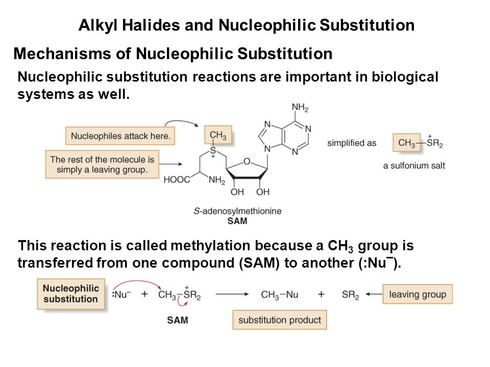 Alkyl Halides and Nucleophilic Substitution Mechanisms of Nucleophilic Substitution Nucleophilic substitution reactions are important in biological sy