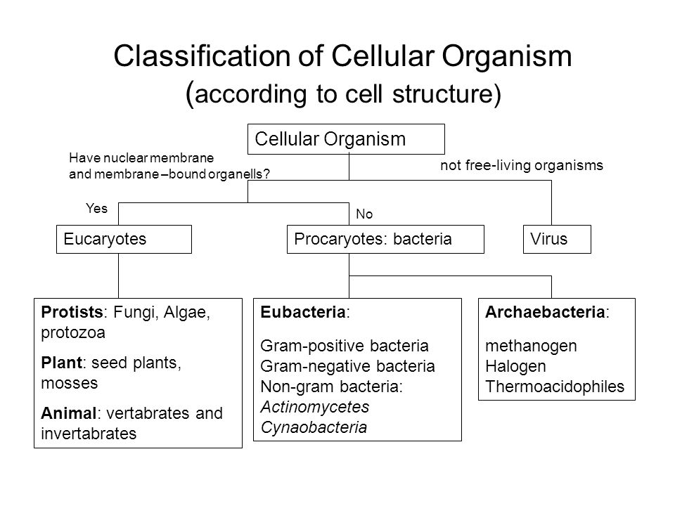 Classification of Cellular Organism ( according to cell structure) Cellular Organism EucaryotesProcaryotes: bacteriaVirus Eubacteria: Gram-positive bacteria Gram-negative bacteria Non-gram bacteria: Actinomycetes Cynaobacteria Protists: Fungi, Algae, protozoa Plant: seed plants, mosses Animal: vertabrates and invertabrates Archaebacteria: methanogen Halogen Thermoacidophiles not free-living organisms Have nuclear membrane and membrane –bound organells.