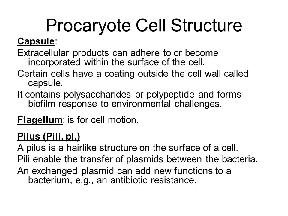 Capsule: Extracellular products can adhere to or become incorporated within the surface of the cell. Certain cells have a coating outside the cell wal