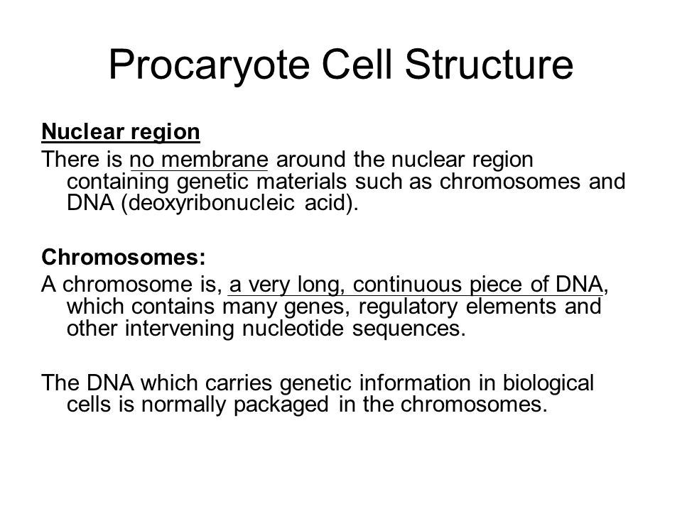 Procaryote Cell Structure Nuclear region There is no membrane around the nuclear region containing genetic materials such as chromosomes and DNA (deox