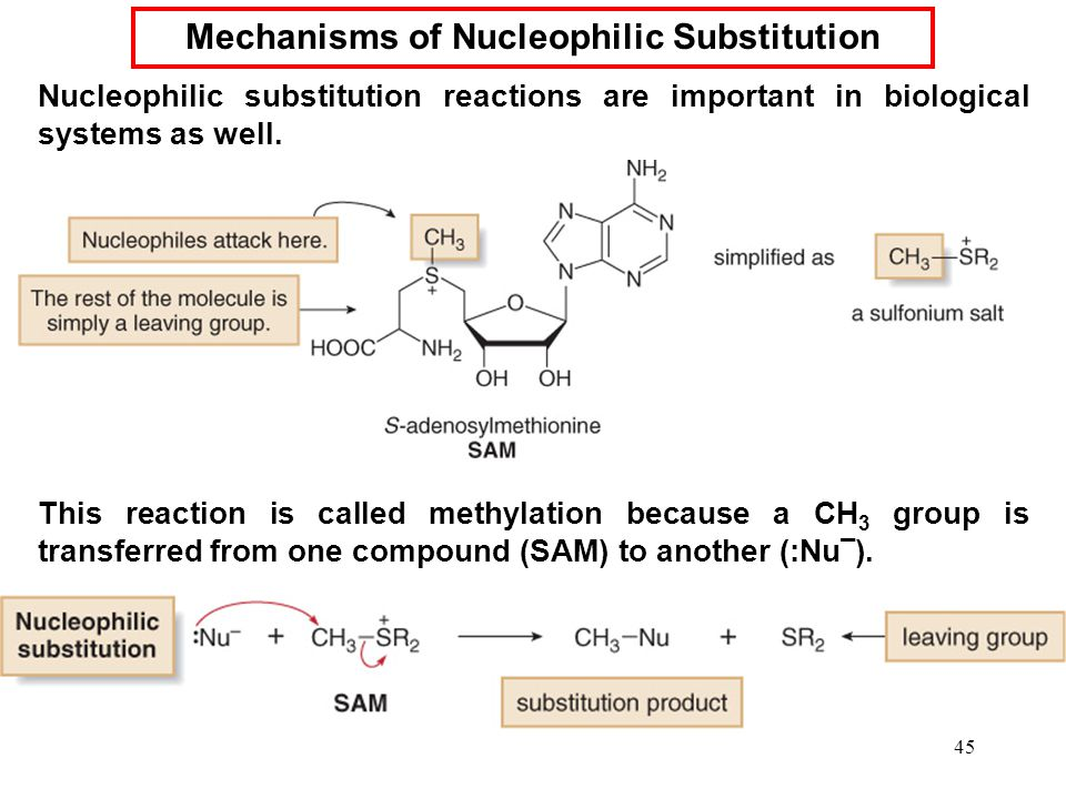45 Nucleophilic substitution reactions are important in biological systems as well. This reaction is called methylation because a CH 3 group is transf
