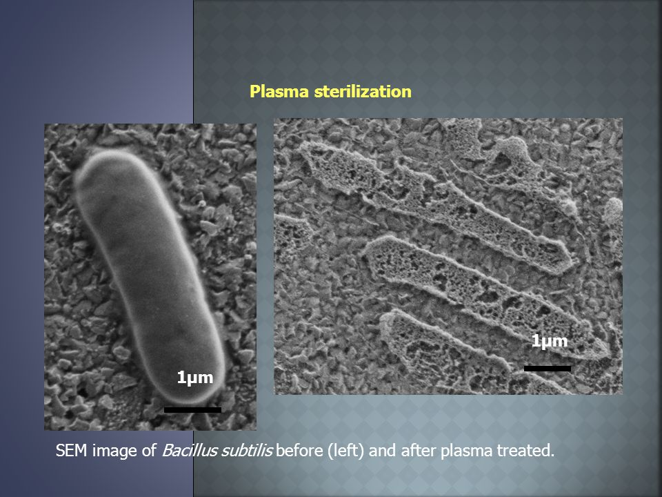 Plasma sterilization SEM image of Bacillus subtilis before (left) and after plasma treated.