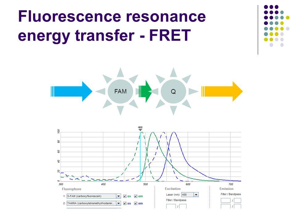 Fluorescence resonance energy transfer - FRET FAM Q
