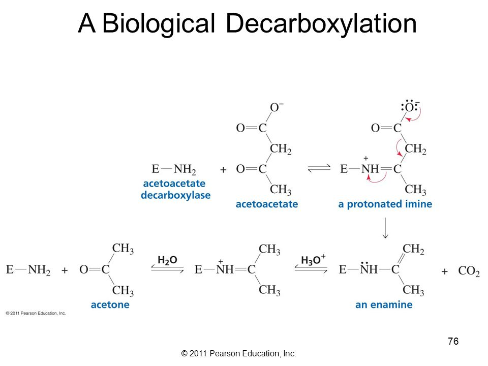© 2011 Pearson Education, Inc. 76 A Biological Decarboxylation