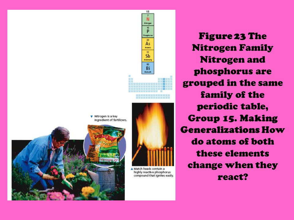 Figure 23 The Nitrogen Family Nitrogen and phosphorus are grouped in the same family of the periodic table, Group 15.