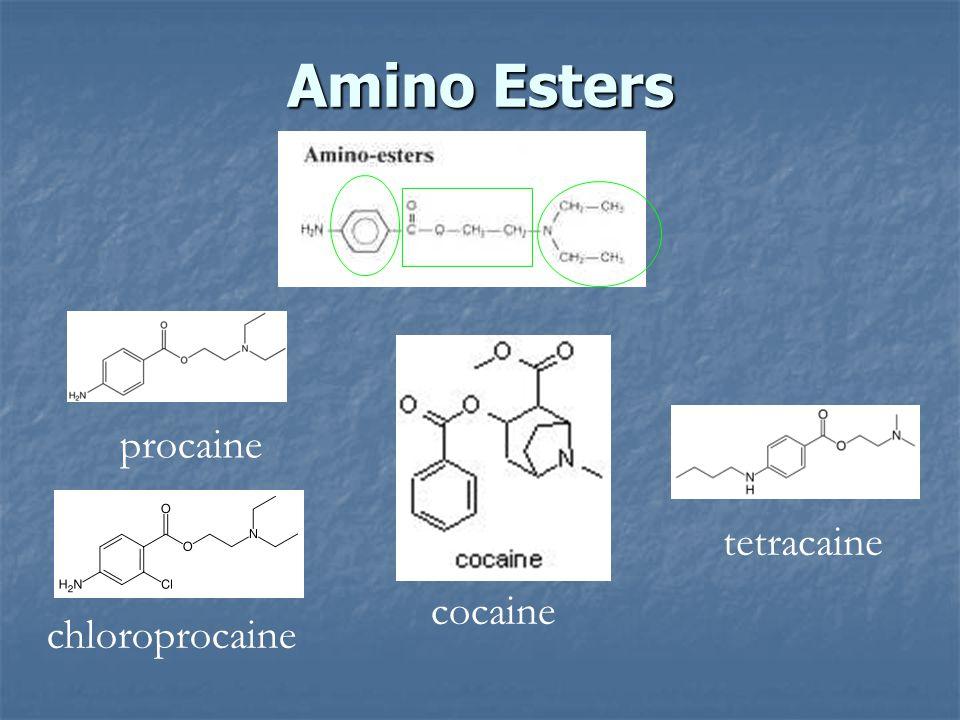 Amino Esters cocaine procaine tetracaine chloroprocaine