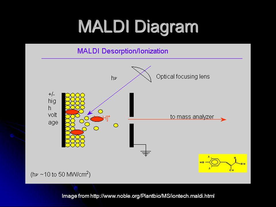 MALDI Diagram Image from http://www.noble.org/Plantbio/MS/iontech.maldi.html