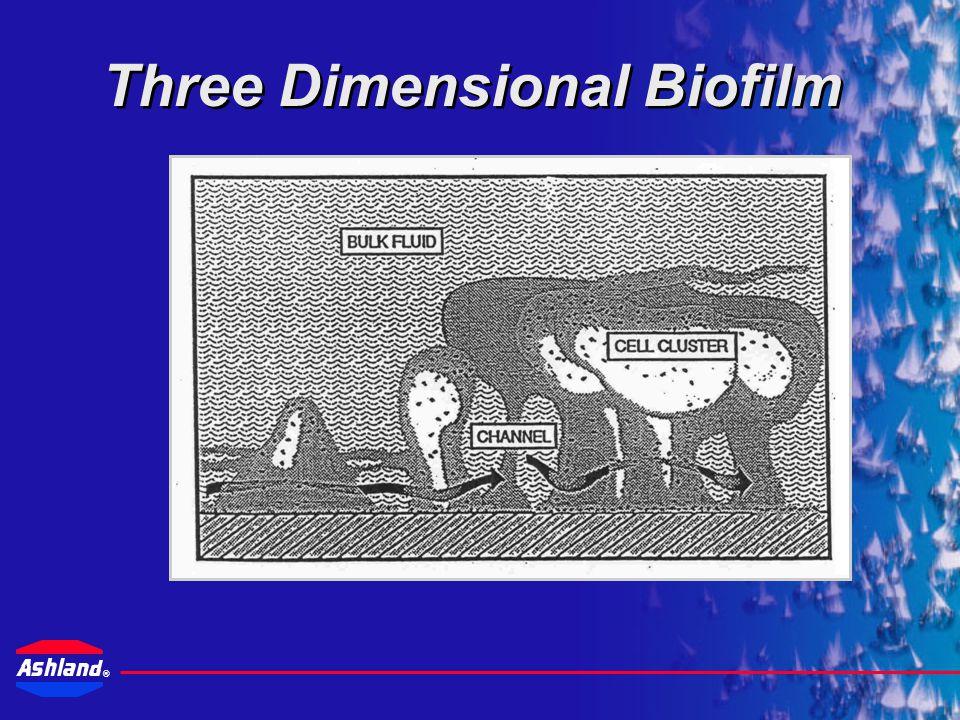® Field Study on Biofilm Growth PhaseTime Colonization15 Minutes Growth Detection2 Days Biofilm Formation (Exopolymer/ Minimum Biofouling) 5 Days Maximum Biofilm Growth (8 – 10 Cells Thick) 14 Days Fully Mature Biofilm Matrix31 – 40 Days