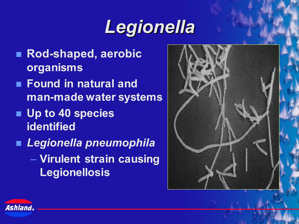 ® Susceptability to Legionnaires' Disease Age – The very young and 40 – 70 year olds Gender – Males are twice as likely to contract the disease than females Heavy Smoker Heavy Drinker Individuals with weakend immune systems – Cancer, AIDS, HIV positive Chronic Medical Problems – respiratory, diabetes, asthma, renal dialysis Certain Drug Therapies – corticasteroids or other immunosuppressive therapies Organ Transplants