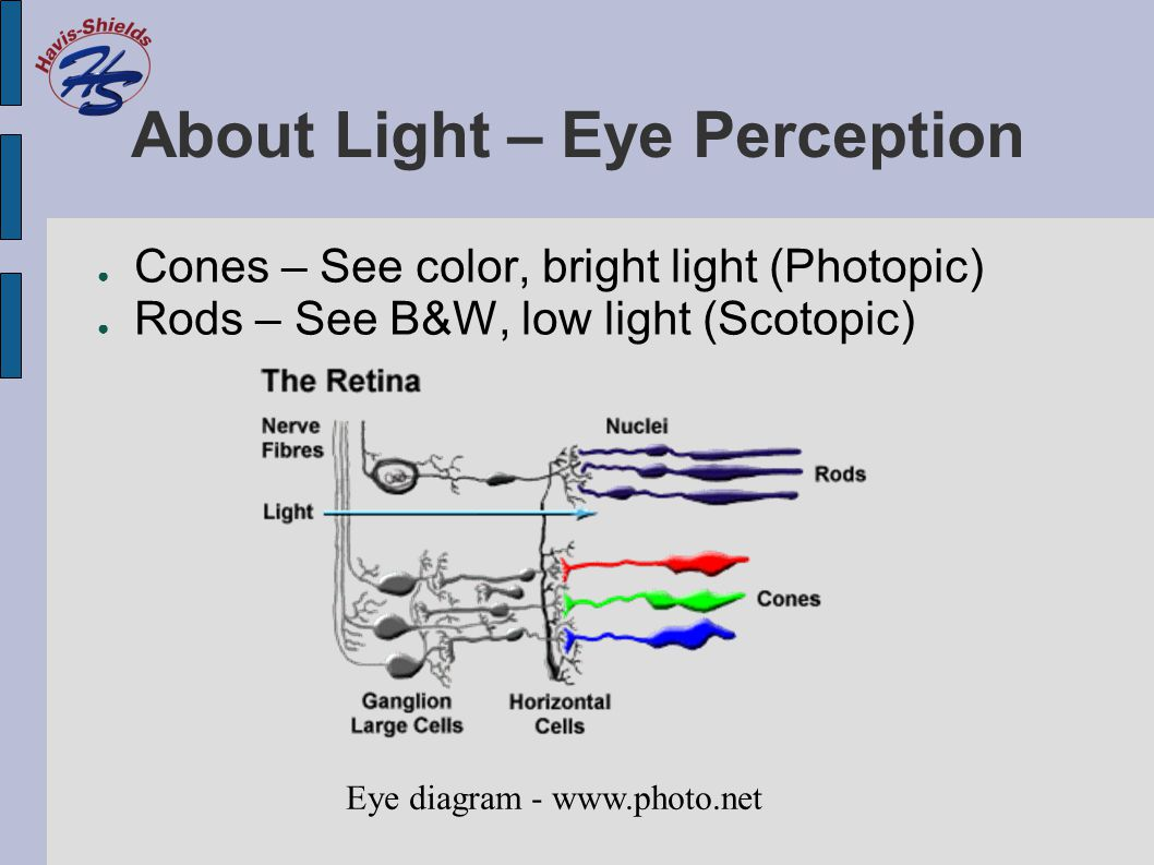 About Light – Eye Perception ● Cones – See color, bright light (Photopic) ● Rods – See B&W, low light (Scotopic) Eye diagram - www.photo.net