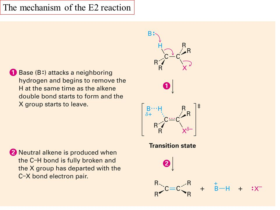 The mechanism of the E2 reaction