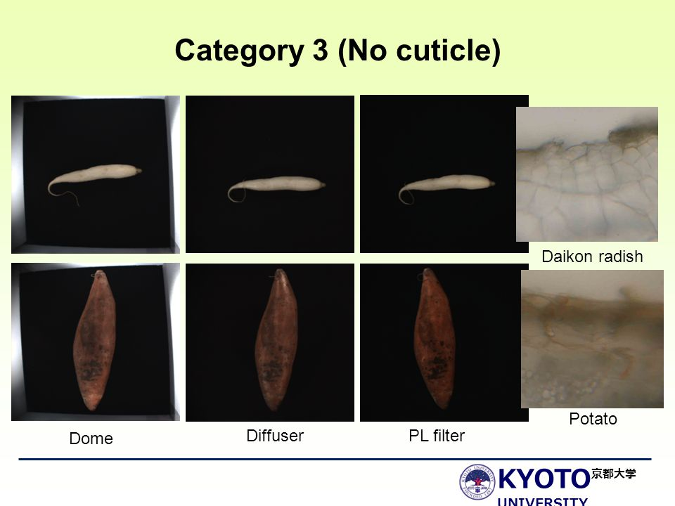 KYOTO UNIVERSITY 京都大学 Category 3 (No cuticle) Dome DiffuserPL filter Daikon radish Potato
