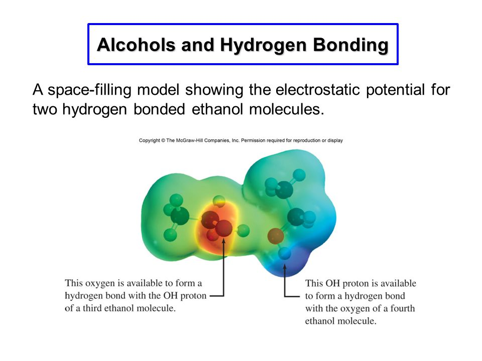 A space-filling model showing the electrostatic potential for two hydrogen bonded ethanol molecules. Alcohols and Hydrogen Bonding