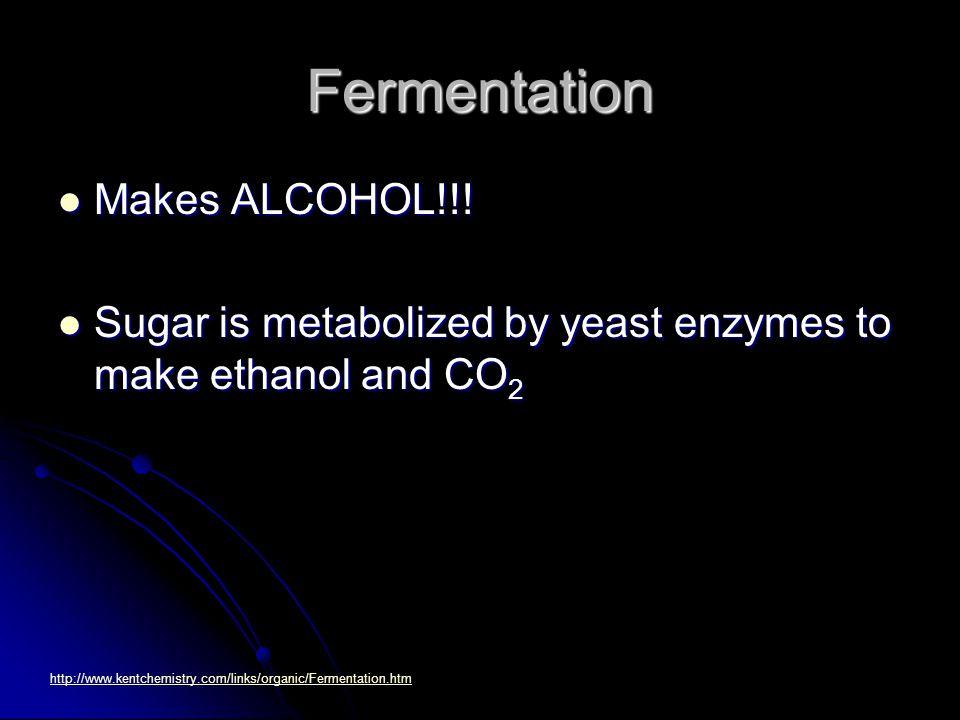 Fermentation Makes ALCOHOL!!. Makes ALCOHOL!!.