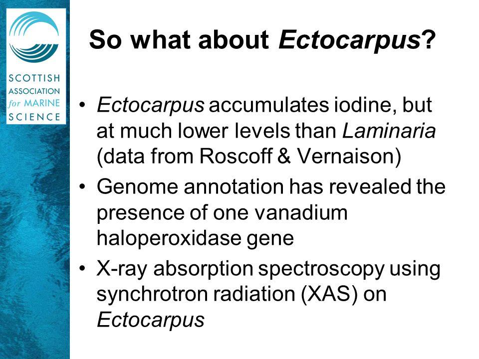 Iodine K-edge XAS of Ectocarpus siliculosus  Like Laminaria, Ectocarpus accumulates iodine as iodide!