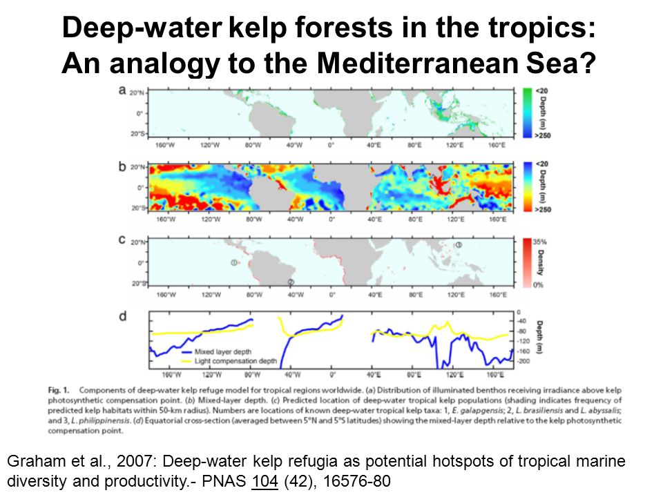 Deep-water kelp in the Mediterranean Sea What are the implications for marine and atmospheric halogen chemistry in the region?