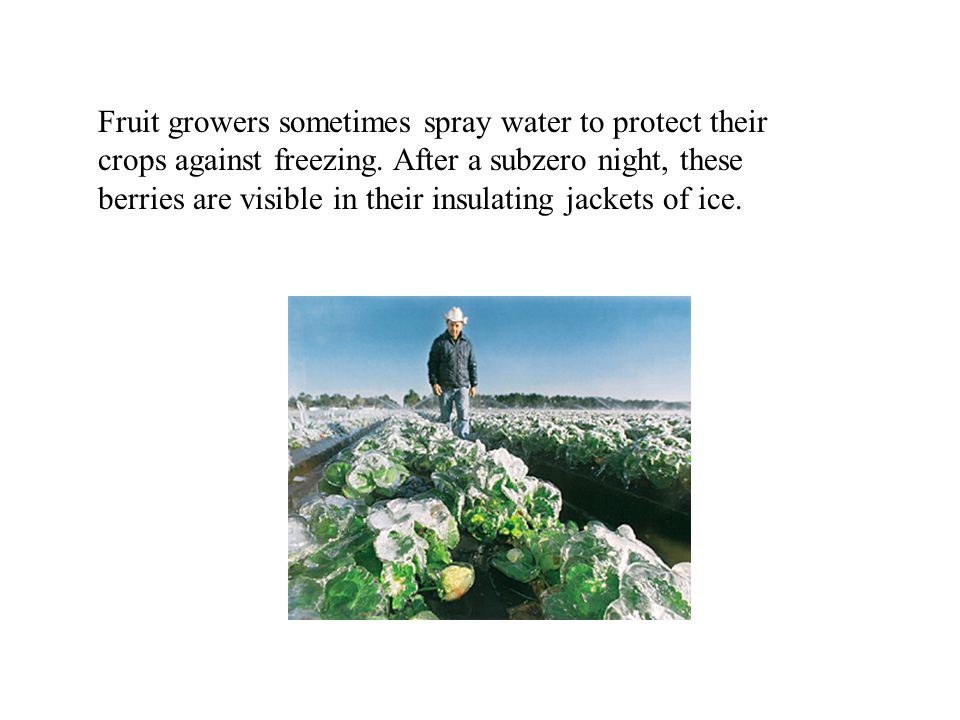 Fruit growers sometimes spray water to protect their crops against freezing.
