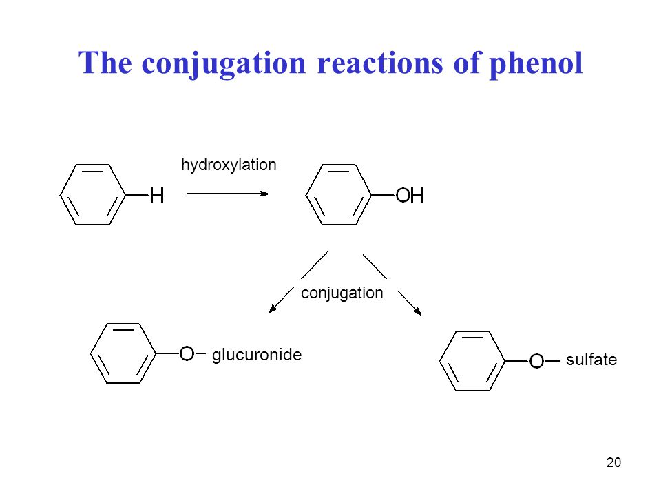 20 The conjugation reactions of phenol glucuronide sulfate conjugation hydroxylation