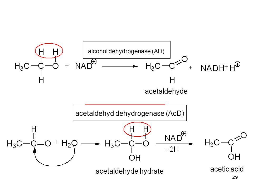 29 acetaldehyd dehydrogenase (AcD) alcohol dehydrogenase (AD) acetaldehyde acetaldehyde hydrate acetic acid