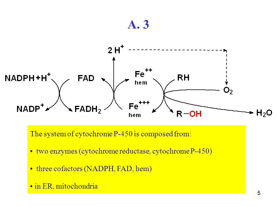 5 A. 3 The system of cytochrome P-450 is composed from: two enzymes (cytochrome reductase, cytochrome P-450) three cofactors (NADPH, FAD, hem) in ER,
