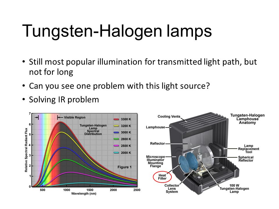 Tungsten-Halogen lamps Still most popular illumination for transmitted light path, but not for long Can you see one problem with this light source.