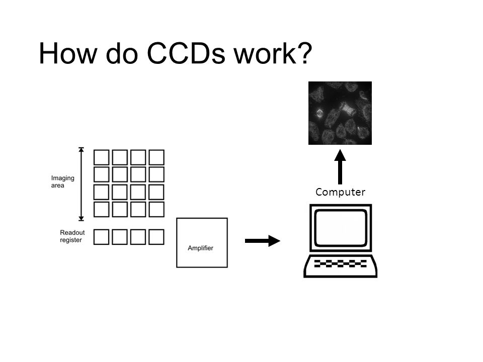 How do CCDs work? Computer
