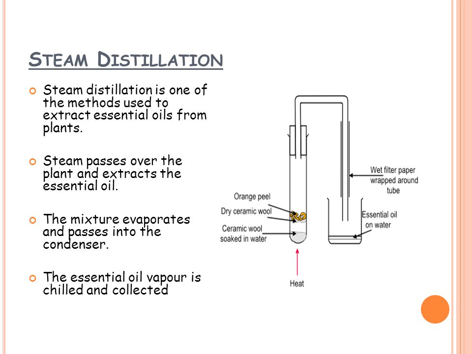 S TEAM D ISTILLATION Steam distillation is one of the methods used to extract essential oils from plants.
