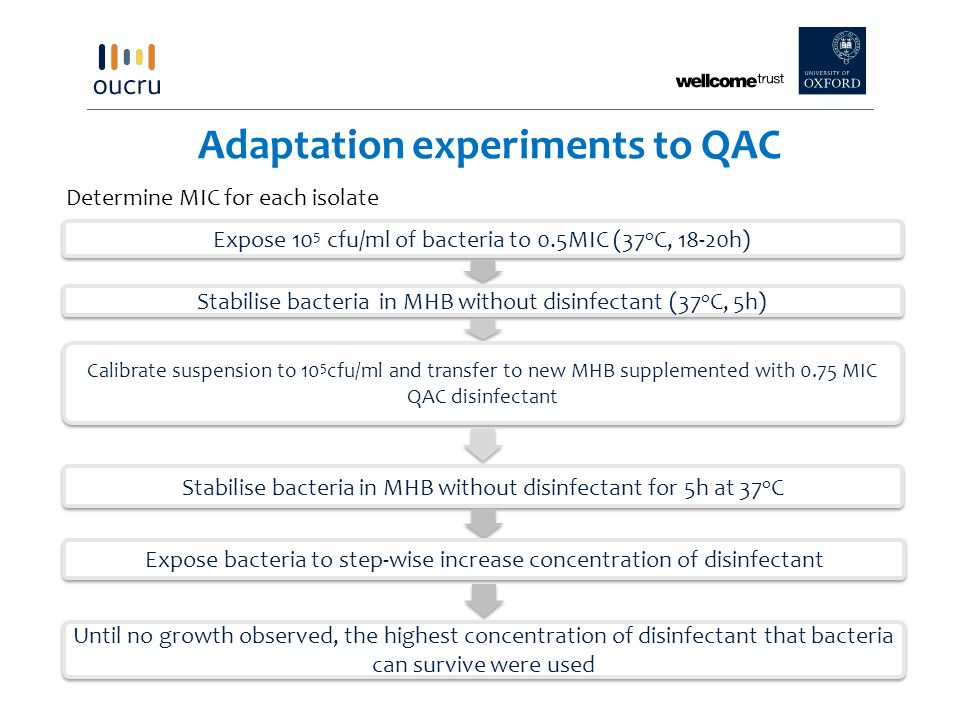 Adaptation experiments to QAC Expose 10 5 cfu/ml of bacteria to 0.5MIC (37 o C, 18-20h) Stabilise bacteria in MHB without disinfectant (37 o C, 5h) Calibrate suspension to 10 5 cfu/ml and transfer to new MHB supplemented with 0.75 MIC QAC disinfectant Stabilise bacteria in MHB without disinfectant for 5h at 37 o C Expose bacteria to step-wise increase concentration of disinfectant Until no growth observed, the highest concentration of disinfectant that bacteria can survive were used Determine MIC for each isolate