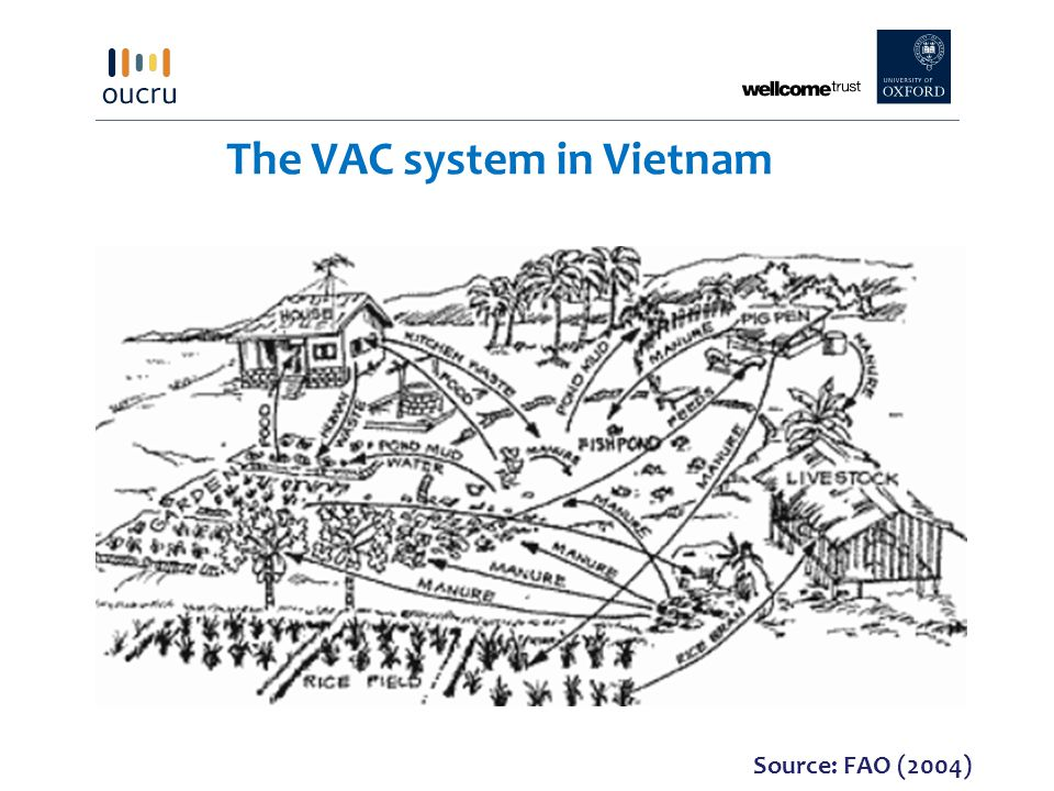 The VAC system in Vietnam Source: FAO (2004)