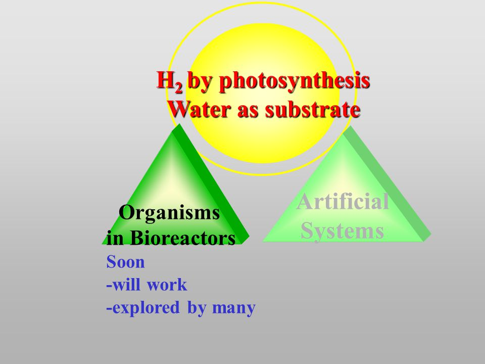 Artificial Systems Organisms in Bioreactors H 2 by photosynthesis Water as substrate Soon -will work -explored by many