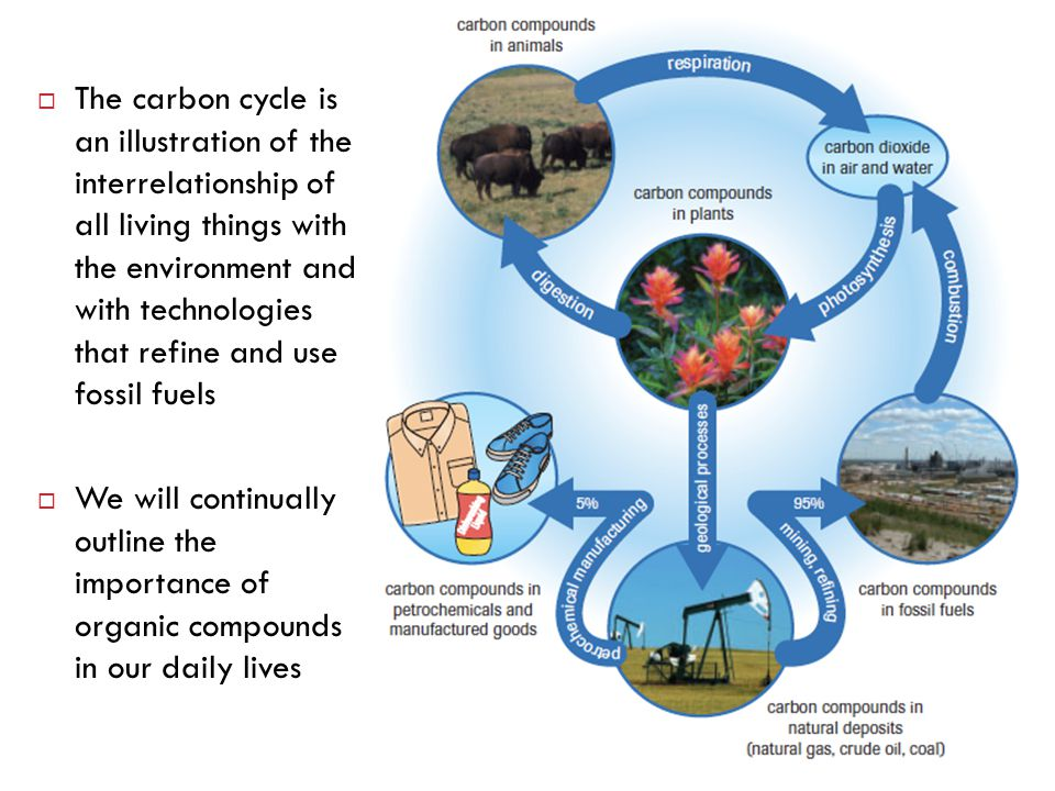  The carbon cycle is an illustration of the interrelationship of all living things with the environment and with technologies that refine and use fos
