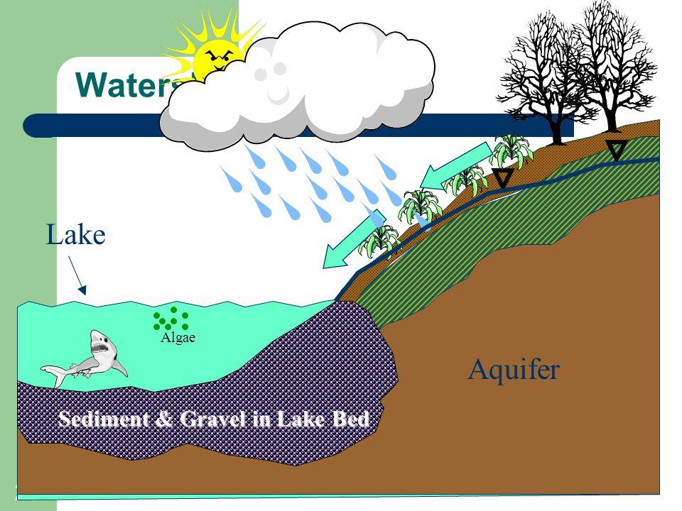 29 Watershed Origins Aquifer Lake Sediment & Gravel in Lake Bed Algae