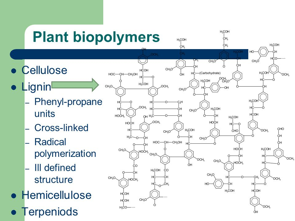 Plant biopolymers Cellulose Lignin – Phenyl-propane units – Cross-linked – Radical polymerization – Ill defined structure Hemicellulose Terpeniods Proteins