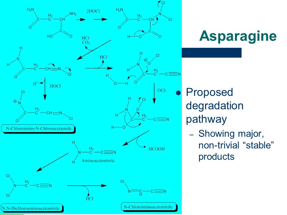 """Asparagine Proposed degradation pathway – Showing major, non-trivial """"stable"""" products"""