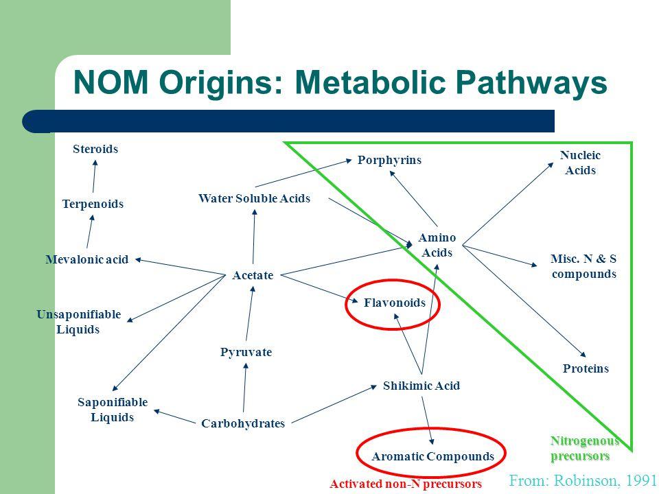 NOM Origins: Metabolic Pathways Pyruvate Acetate Water Soluble Acids Porphyrins Amino Acids Nucleic Acids Misc.
