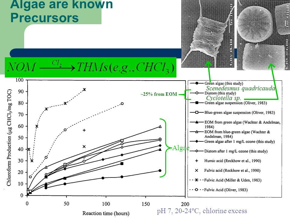 Algae are known Precursors From: Plummer & Edzwald, 2001 – [ES&T:35:3661] Scenedesmus quadricauda Cyclotella sp. ~25% from EOM pH 7, 20-24ºC, chlorine
