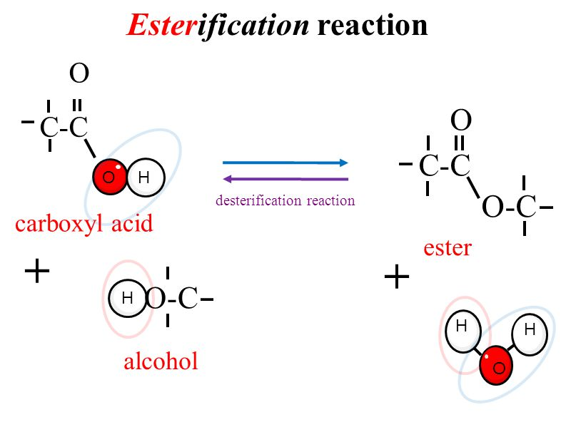 Esterification reaction desterification reaction H O H O-C C-C O + ester alcohol carboxyl acid H C-C O O H O-C +