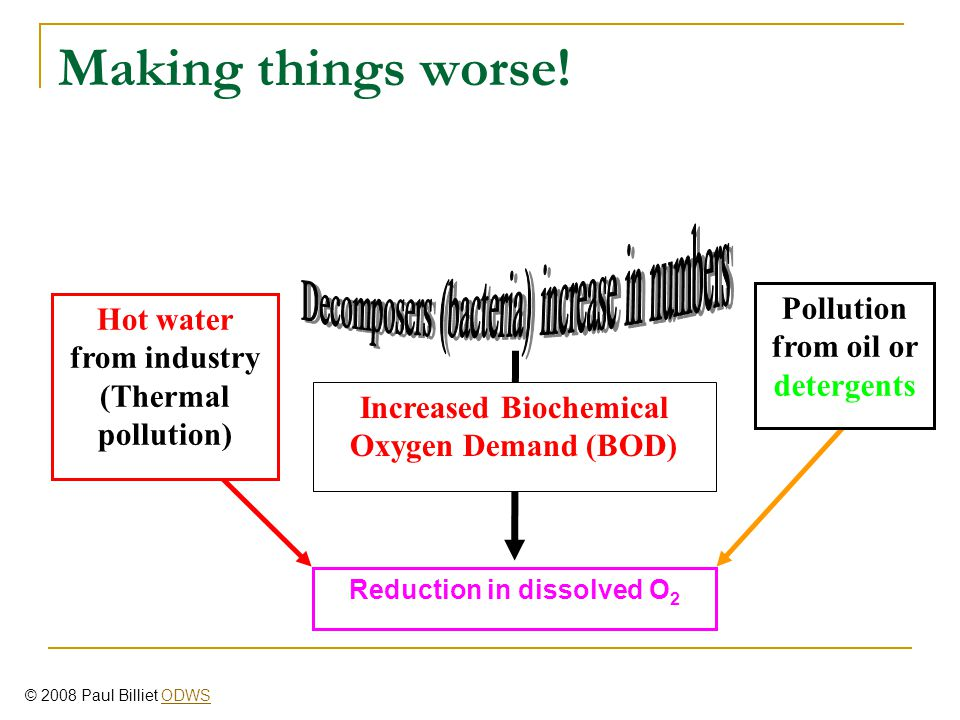 Increased Biochemical Oxygen Demand (BOD) Hot water from industry (Thermal pollution) Pollution from oil or detergents Reduction in dissolved O 2 Making things worse.