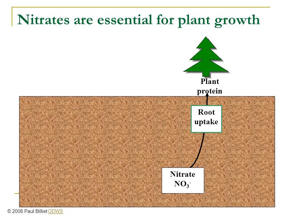 Nitrates are recycled via microbes Nitrification Ammonium NH 4 + Ammonification Nitrite NO 2 - Soil organic nitrogen Animal protein Root uptake Nitrate NO 3 - Plant protein © 2008 Paul Billiet ODWSODWS