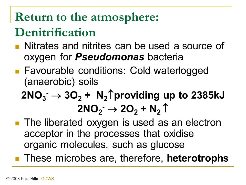 Return to the atmosphere: Denitrification Nitrates and nitrites can be used a source of oxygen for Pseudomonas bacteria Favourable conditions: Cold wa