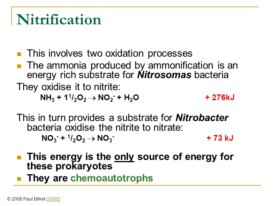 Nitrification This involves two oxidation processes The ammonia produced by ammonification is an energy rich substrate for Nitrosomas bacteria They oxidise it to nitrite: NH 3 + 1 1 / 2 O 2  NO 2 - + H 2 O + 276kJ This in turn provides a substrate for Nitrobacter bacteria oxidise the nitrite to nitrate: NO 3 - + 1 / 2 O 2  NO 3 - + 73 kJ This energy is the only source of energy for these prokaryotes They are chemoautotrophs © 2008 Paul Billiet ODWSODWS