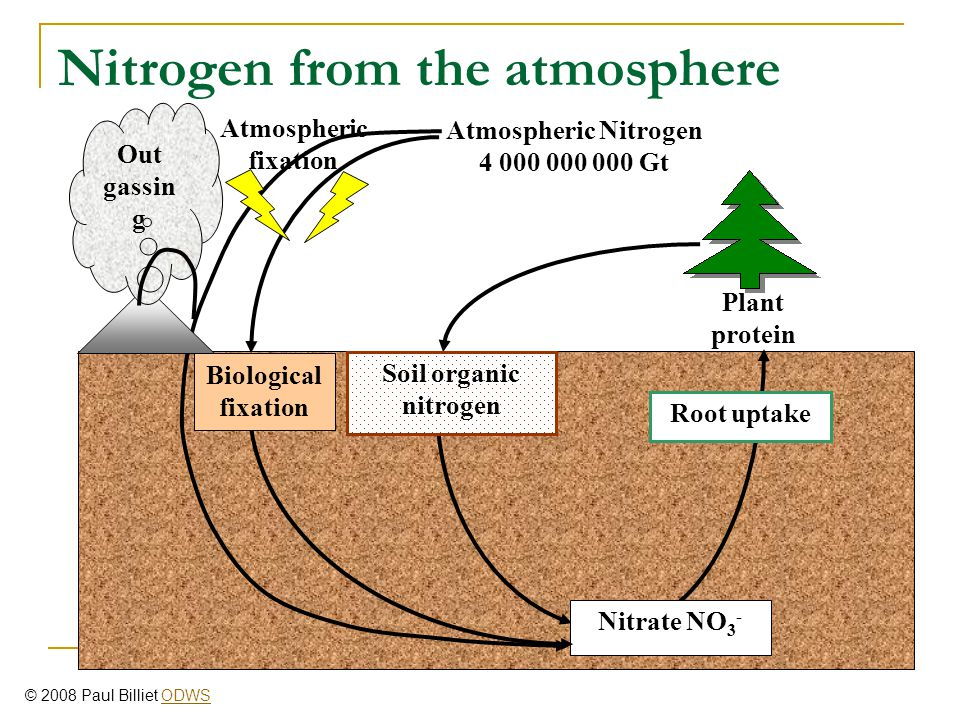 Root uptake Nitrate NO 3 - Plant protein Soil organic nitrogen Nitrogen from the atmosphere Biological fixation Atmospheric fixation Out gassin g Atmo